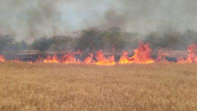 صورة حرائق هائلة في مساحات رعوية ببلدية غابو